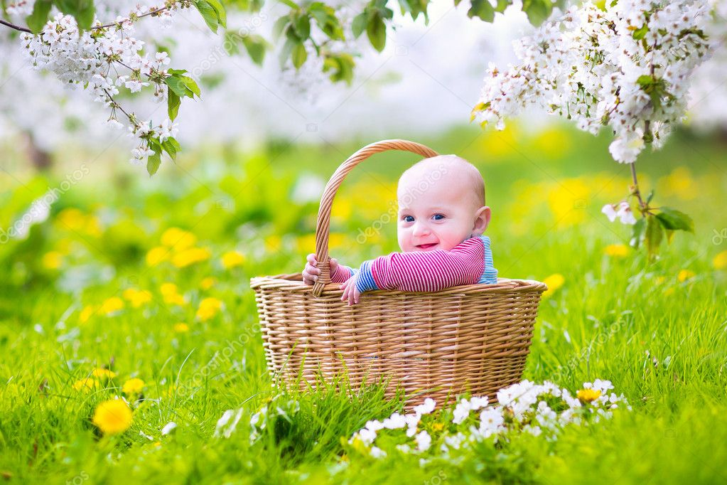 Happy baby in a basket in a blooming apple tree