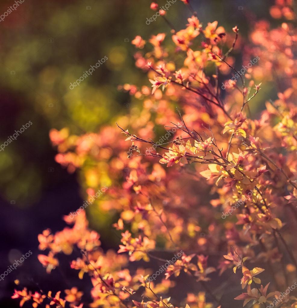 beautiful plants. nature, spring