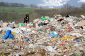 A dog between the polluted nature and beautiful landscapes