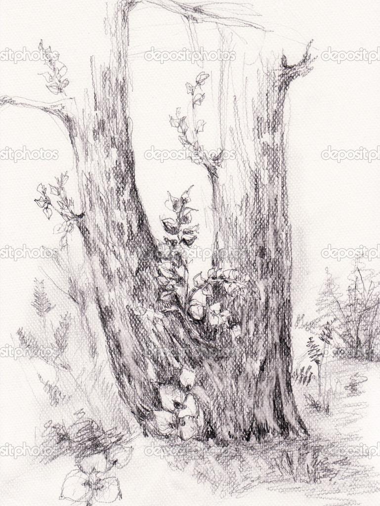 Tuzka Priroda Kresba Ilustrace Strom Stock Fotografie