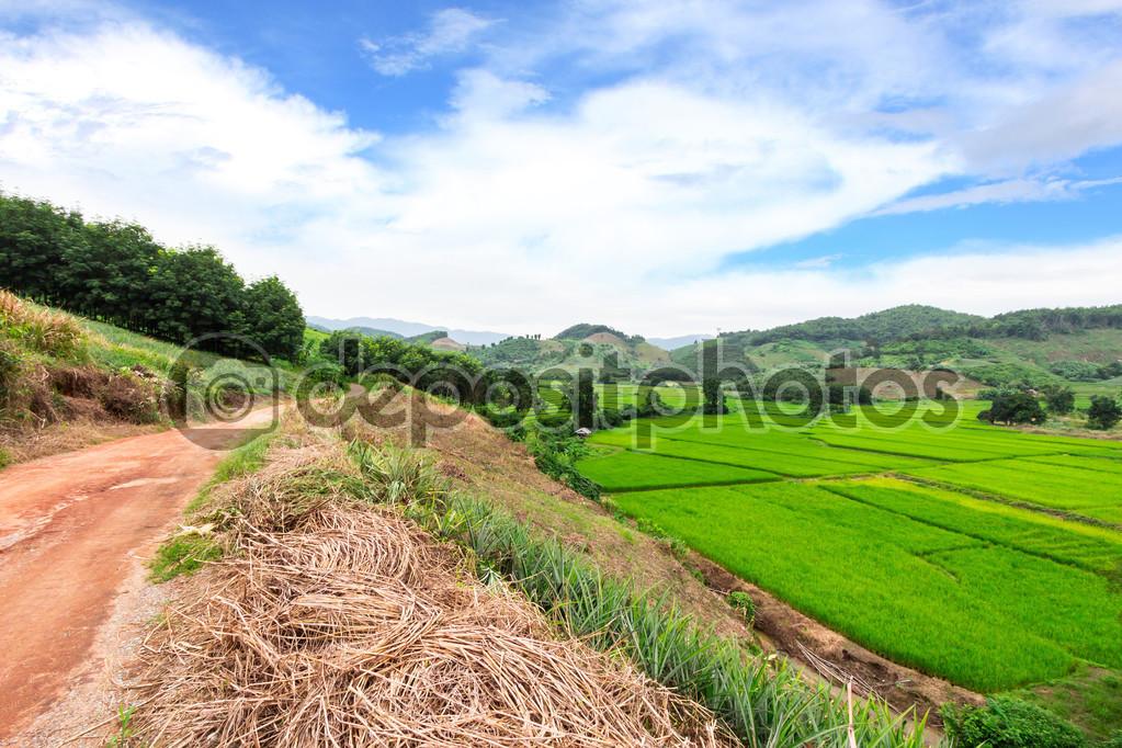 Green Terraced Rice Field in Chiangrai, Thailand