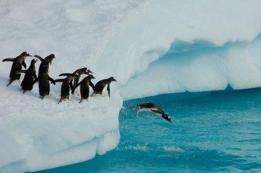 Penguins diving