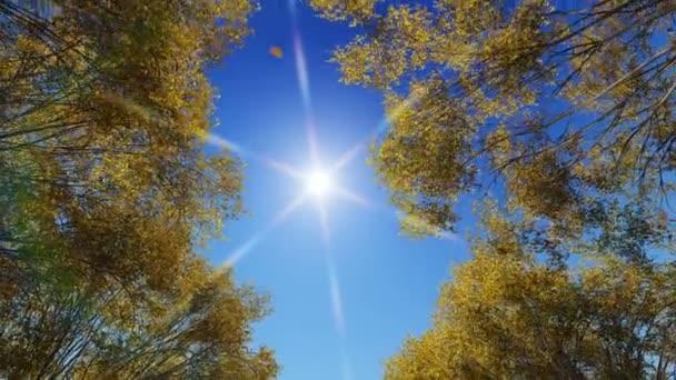 stromy s padající listí