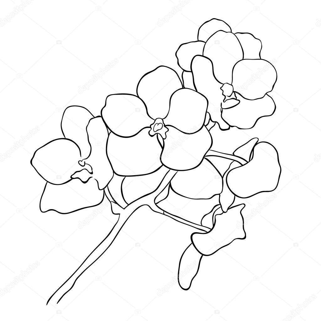 orchid branch circuit, vector illustration on white background