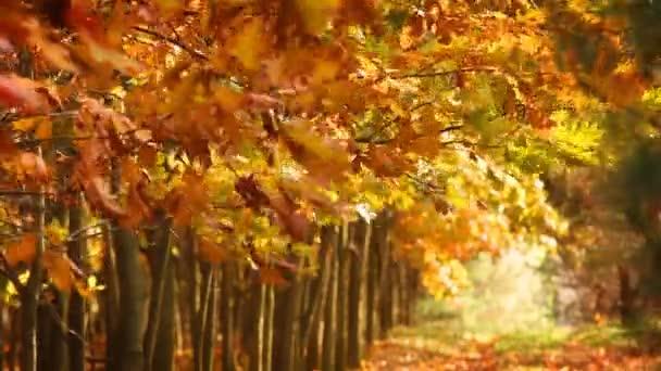 scenario di autunno