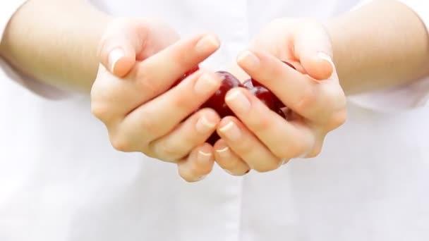 Fresh cherries in a womans hands.