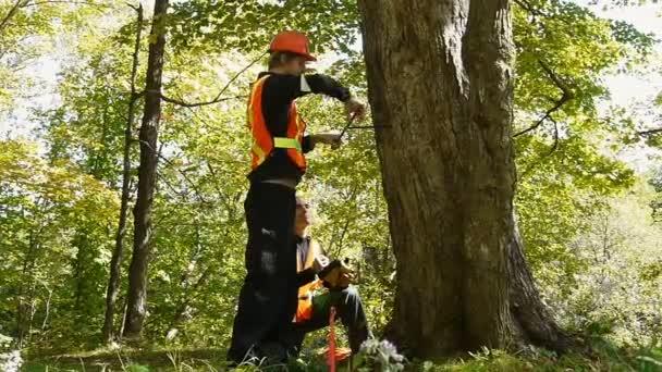strom studie