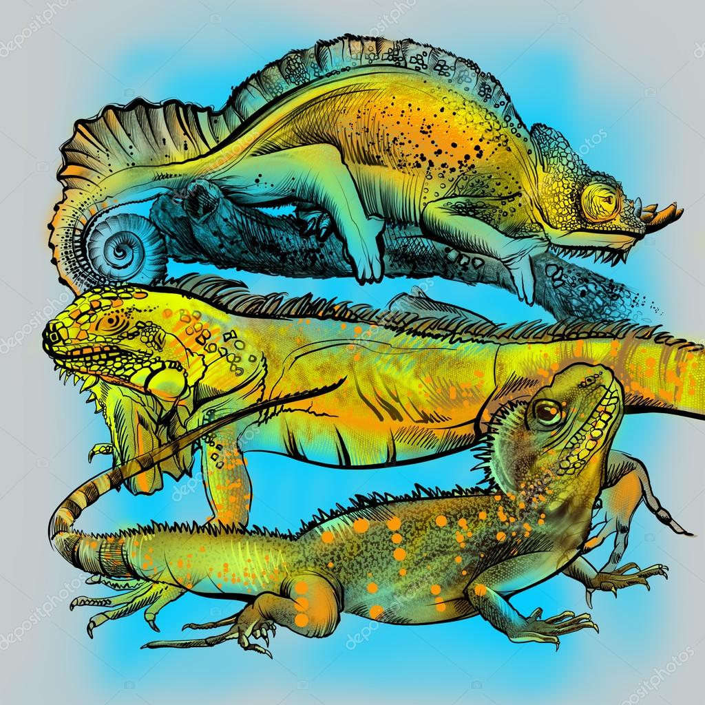 Painted bright colored lizards on a tree branch. Iguana, chameleon, reptile. Children's drawing. Encyclopedia of biology. Coloring book, fabulous illustration. Zoo
