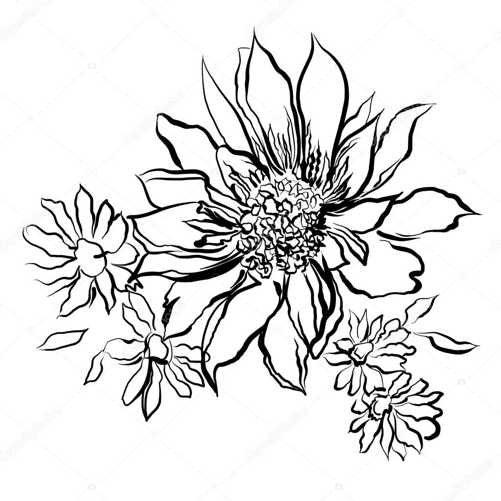 Flowers, painted black outline on the white background
