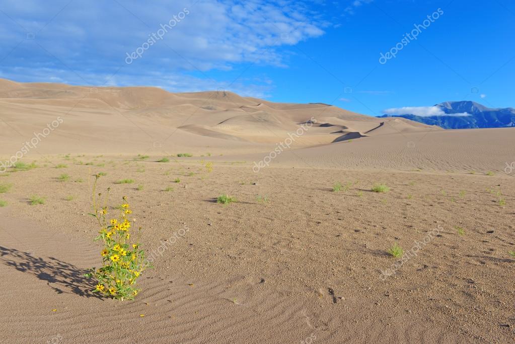 Great Sand Dunes National Park, Colorado USA