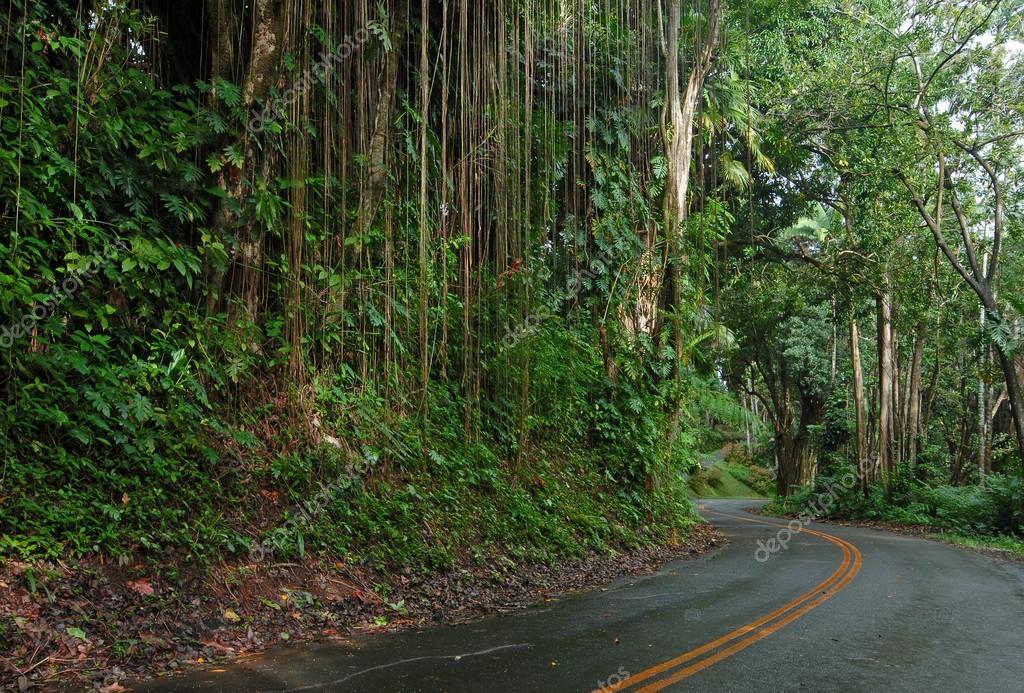 Driving on the Road to Hana, Maui, Hawaii