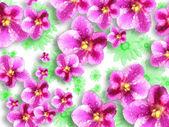orchidea virágok