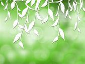 Fényképek a zöld levelek