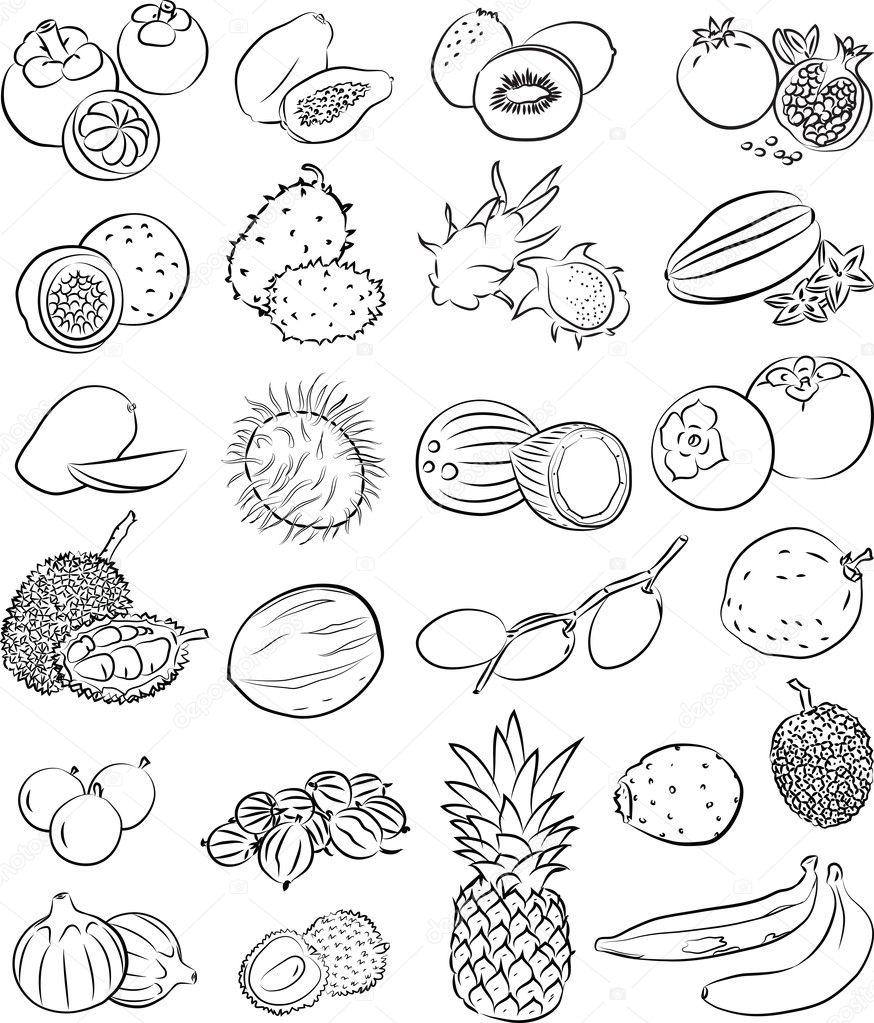 Vector set of tropical fruits in line art clipart vector