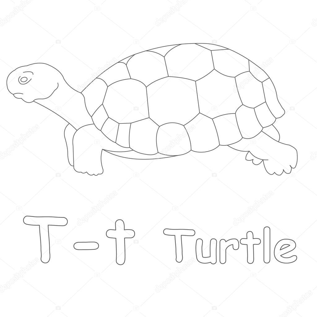 Kaplumbağa Boyama Sayfası Için T Stok Foto Art1o1 44628335