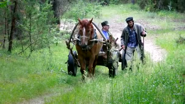Horset csapat coachman utazás erdei út