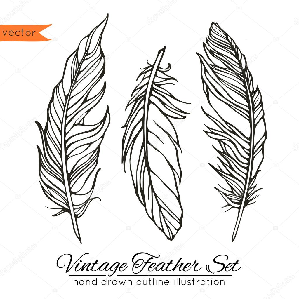 Vintage feather set isolated on white — Stock Vector ...