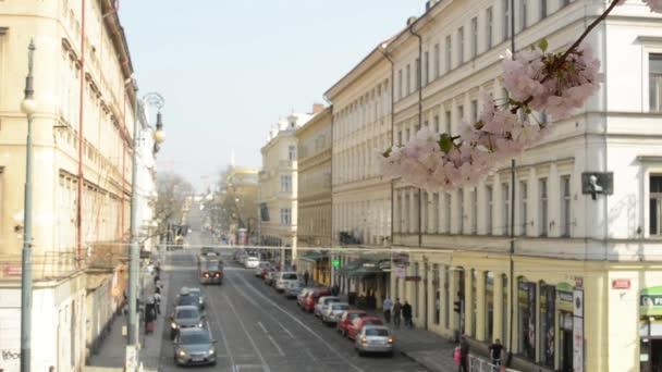 jaro park - kvetoucí větev stromu s rušnou ulici v pozadí