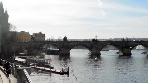 Charles Bridge with Vltava river and birds