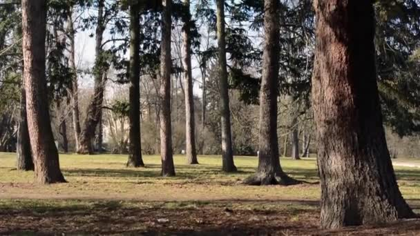 lesy a stromy větve