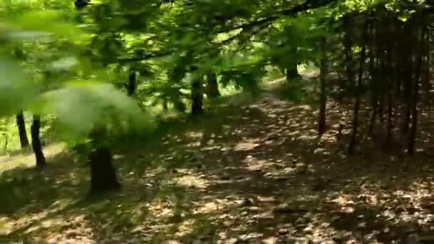 lesní - steadicam běží v lese - pohled z první osoby