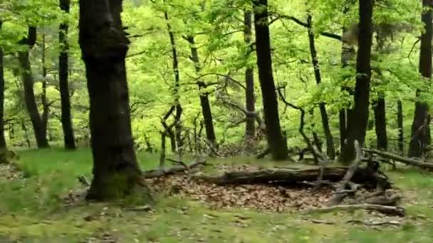 Les - steadicam procházky v lese