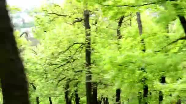 Les - steadicam létání v lese