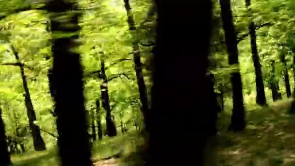 erdő - erdő repülő Steadicamnél