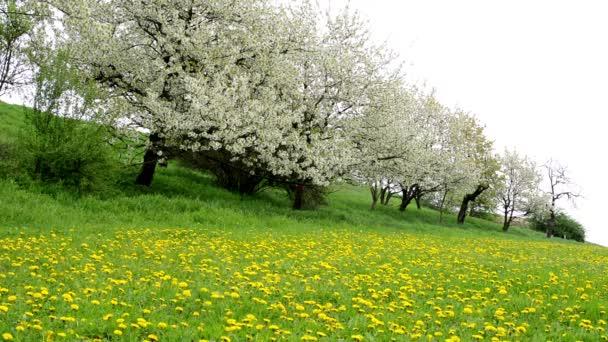 Flowering trees and field of flowers (dandelion)