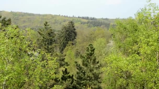 Panorama of forest with mountain