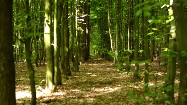 Symmetric forest (trees)