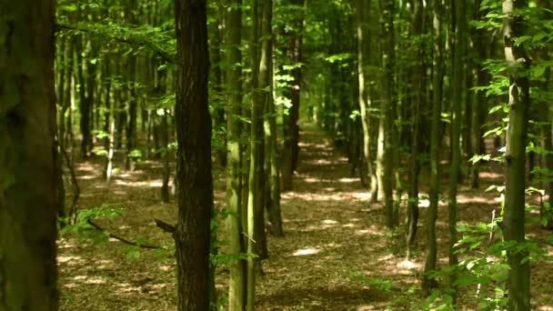 symetrický lesa (stromů) - ostření nástrojů ze stromu do lesa