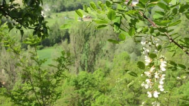 Wald (Bäume) mit Details des Zweiges