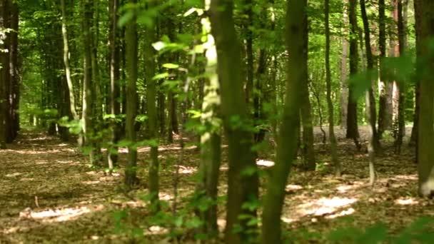 Panorama symetrický lesa (stromy)