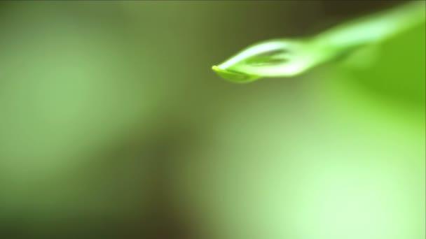 Wassertropfen auf Blatt Makro