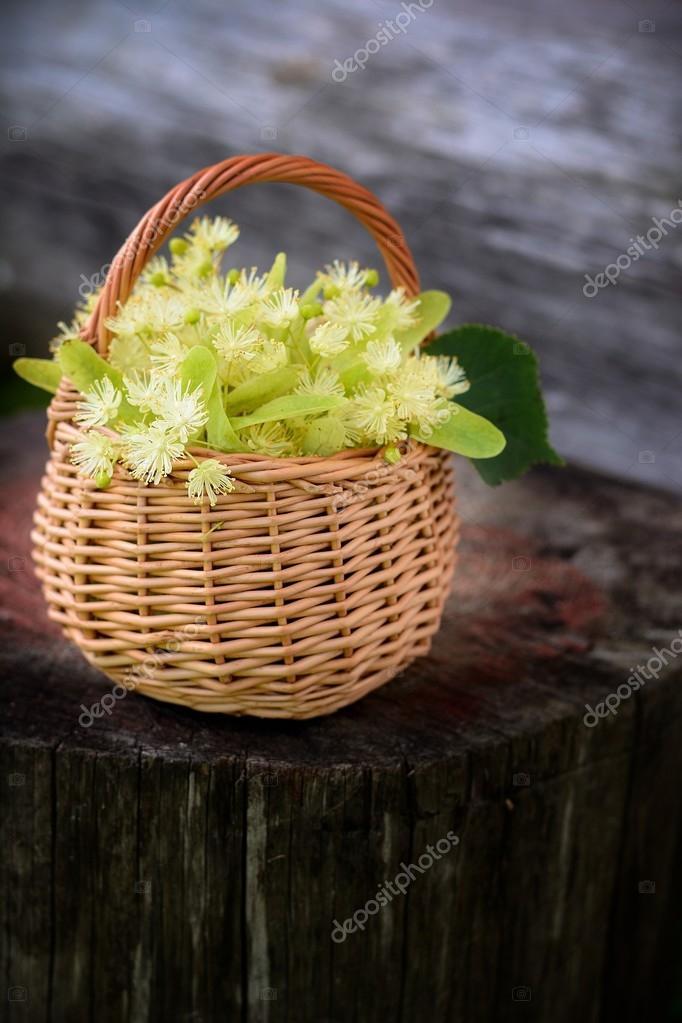 medical linden flowers in a rustik  basket