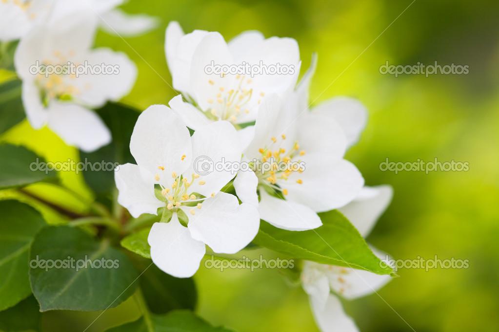 Imagenes De Flores Blancas Hermosas Hermosas Flores Blancas De