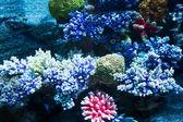 korály na mořské dno