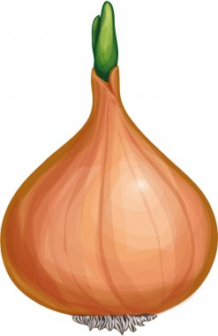 Ground vegetables onion