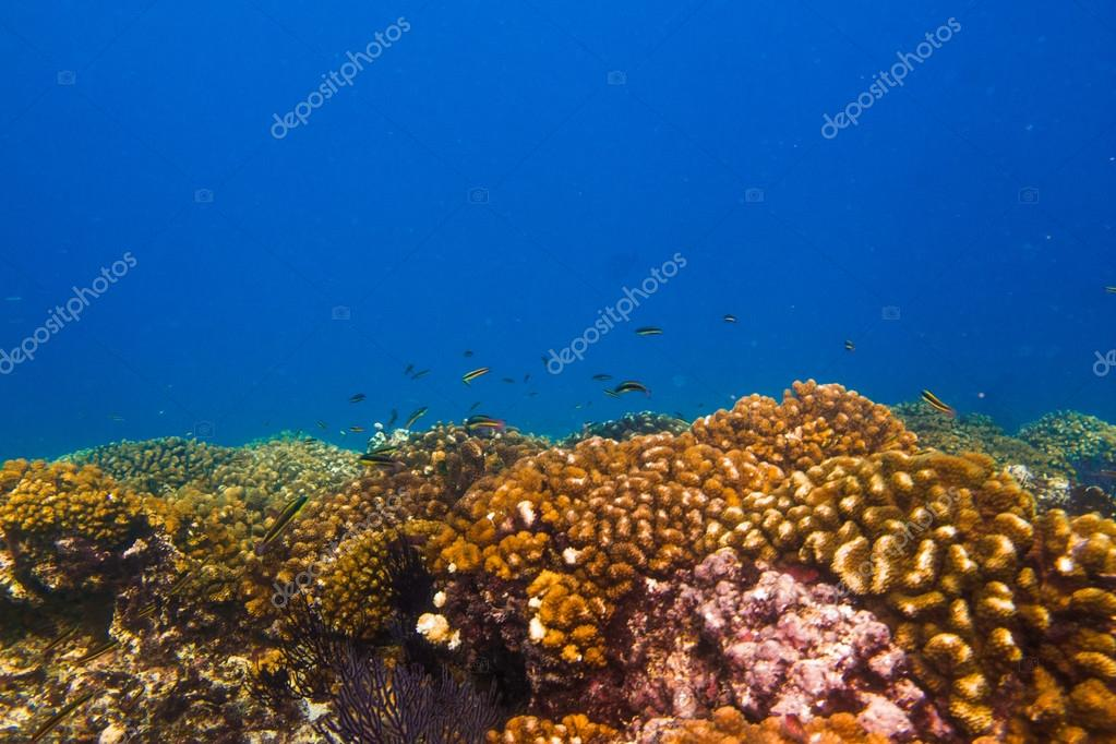 Reefs from the Sea of Cortez