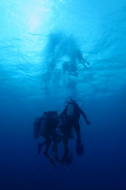 Divers in caribbean sea