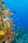 Fotografie Coral reef scenics