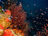 Photo Coral reef from the caribbean.