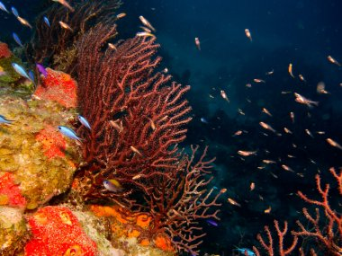 Coral reef from the caribbean.