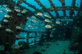 Photo Shipwreck and fish
