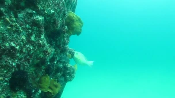 General views from reefs of cabo pulmo