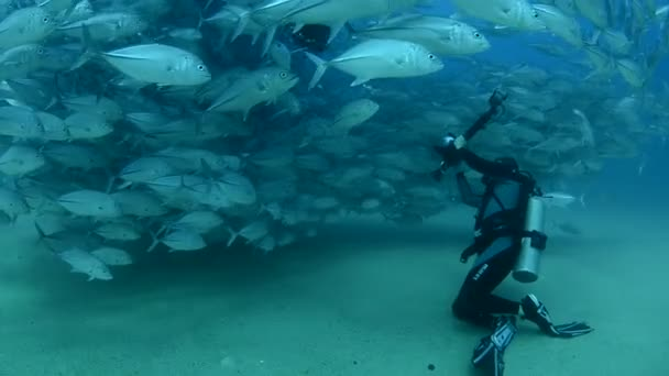 Divers with large school of fish