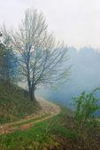percorso nella foresta con atmosfera drammatica