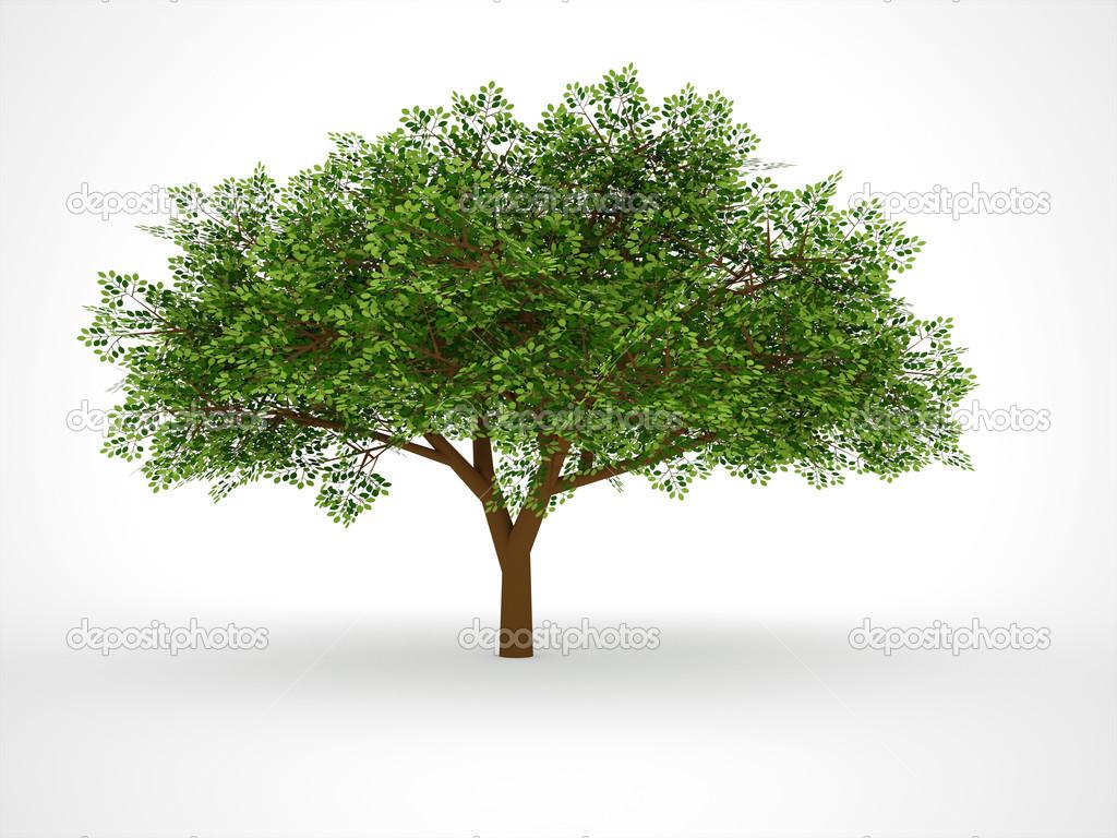 Imágenes Arbol Frondoso árbol Frondoso Aislado Foto De Stock