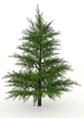 Pine tree rendered
